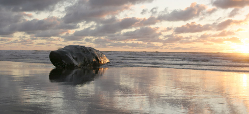 Ocean Odessy