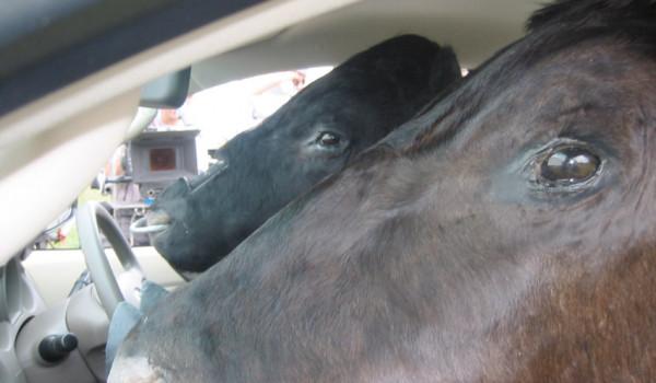"Toyota ""bulls"" TVC"